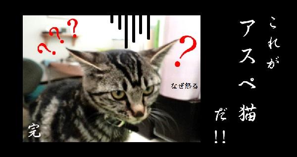 ルーはアスペ猫の画像