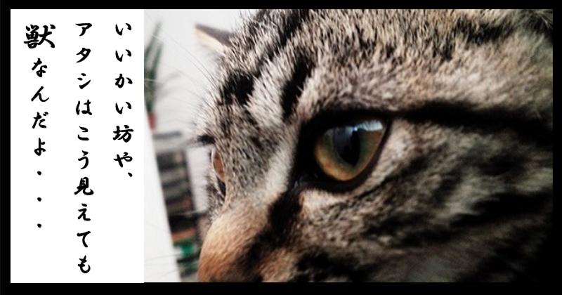 ルーは獣の画像